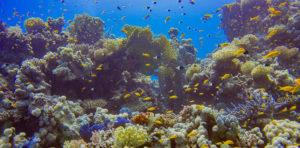 Bunte Unterwasserwelt beim Tauchen in Hurghada