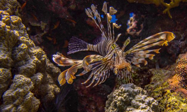 Was keine Tauchschule verschweigen sollte – die gefährlichsten Meerestiere