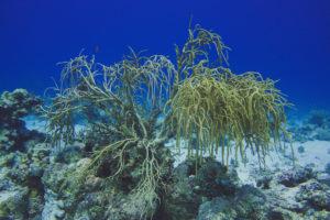 Tauchbasis und ihre Unterwasserlandschaft