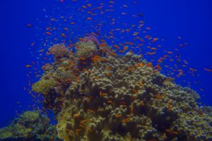 Bunte Korallenblöcke auf Tauchreisen entdecken