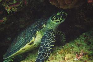 Schildkröte in einer Höhle