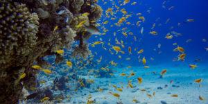 Bunte Fische im Tauchkurs