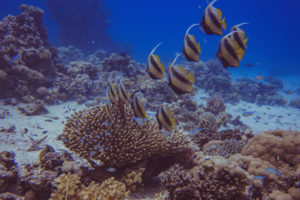 Faszinierende Fische beim Tauchkurs