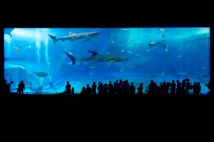 Unterwasser Aquarium