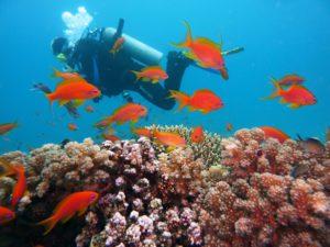 Tauchen Mallorca Unterwasserwelt