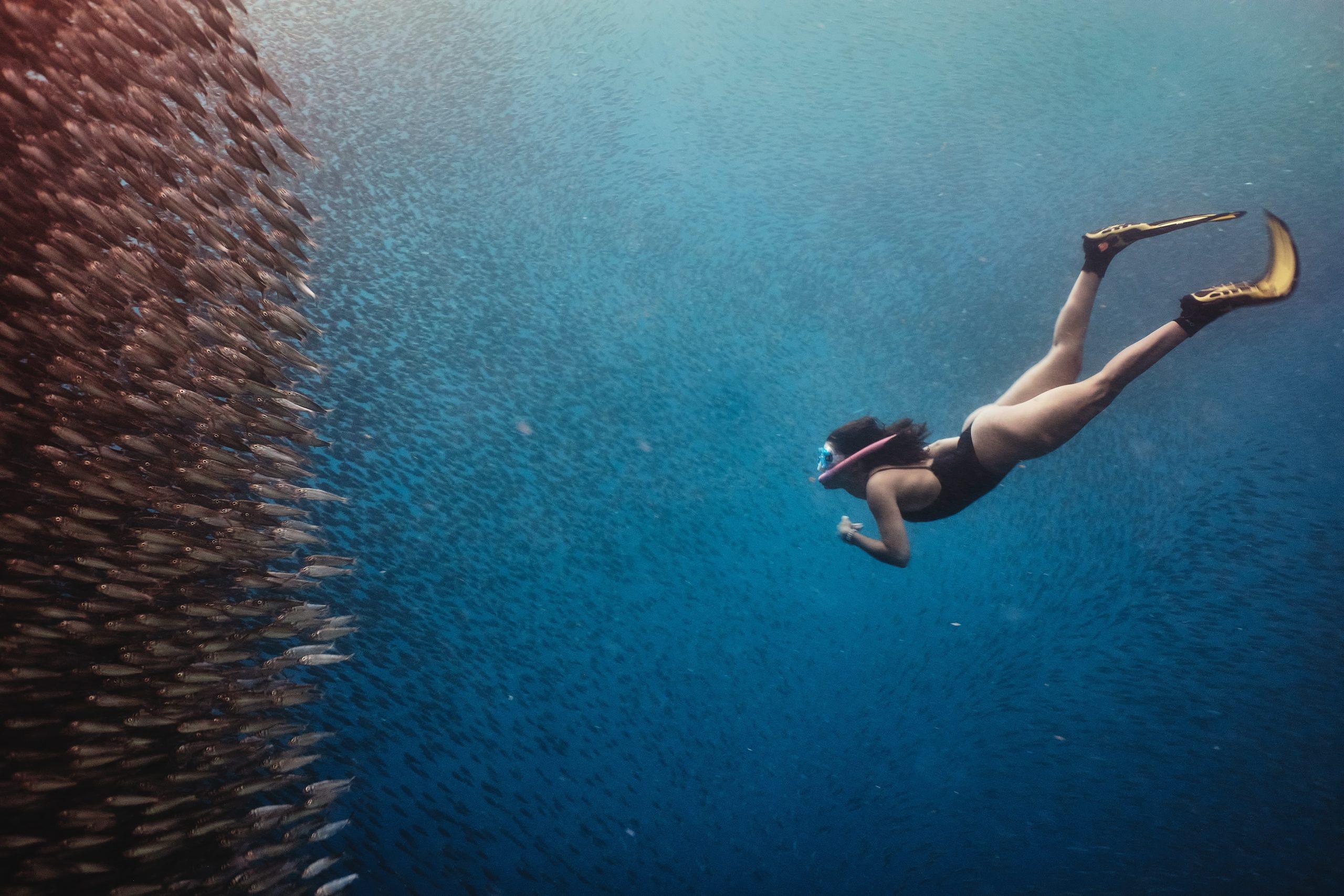 Apnoetaucherin im Fischschwarm