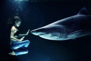 Fuchshai und Taucher gegenüber