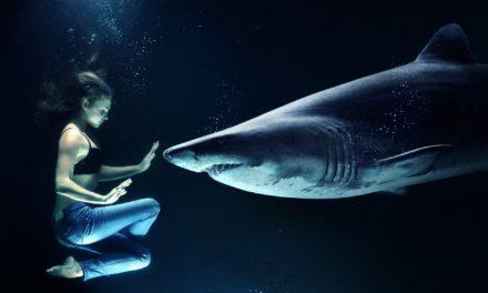 Fuchshai oder auch Drescherhai
