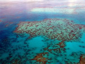 Meeresschildkroete Heimat Great Barrier Reef