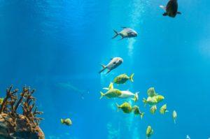 Verschiedene Fische nahe Wasseroberfläche